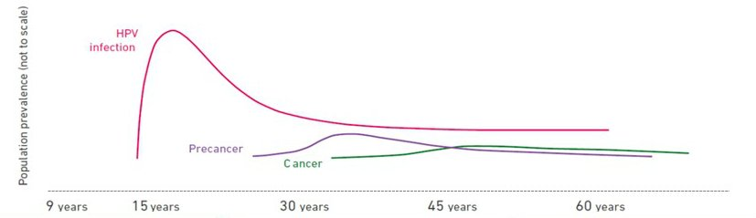 what causes hpv cervical cancer hpv high risk genotypes positive